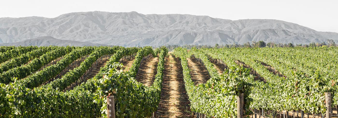 Ponte Winery vineyards