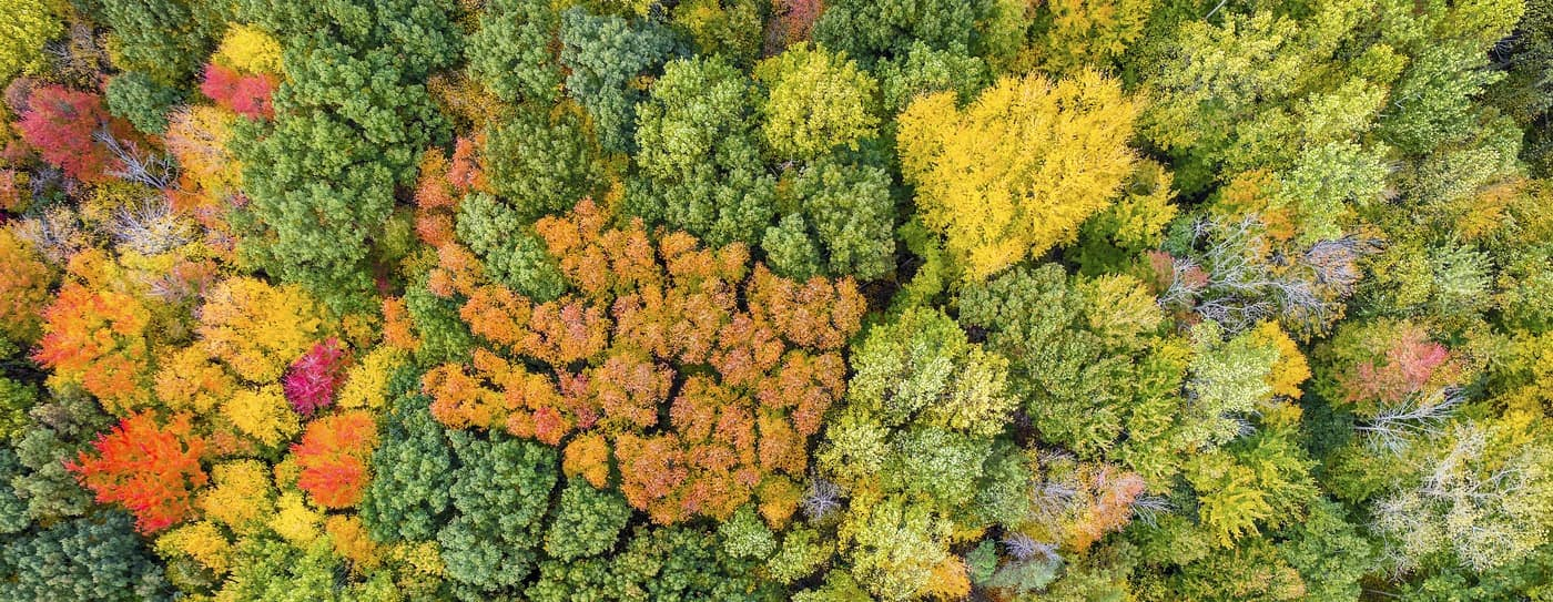 fall trees aerial view