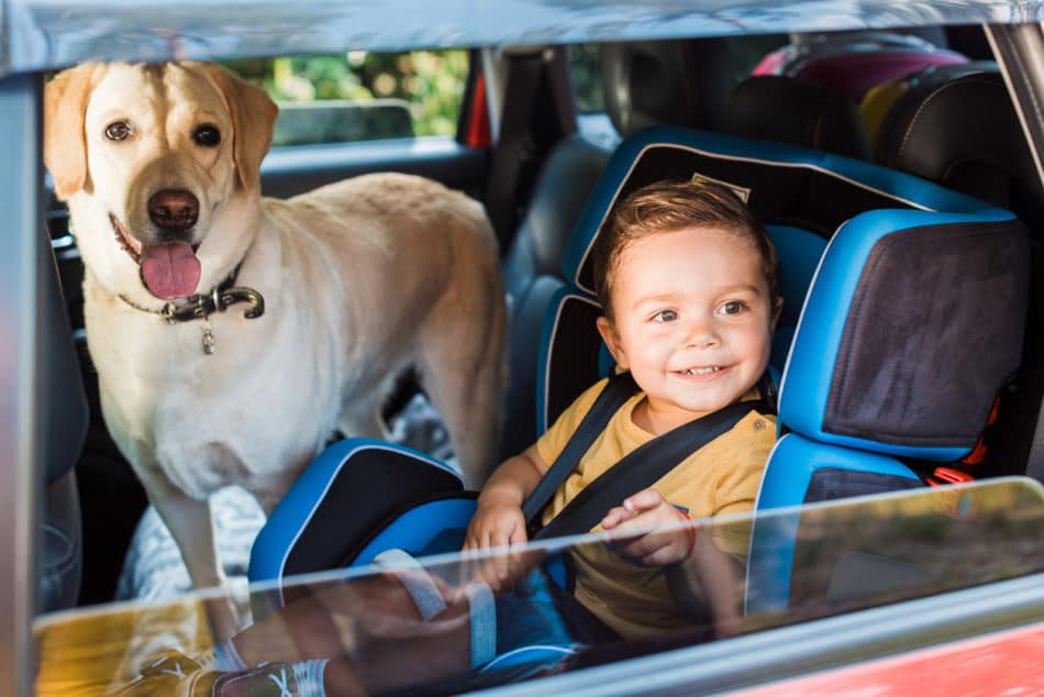 Toddler and dog traveling in the second seat of the car together.