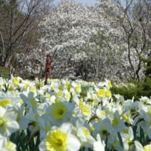 cox-arboretum-metropark-dayton-oh