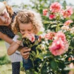 Grandmother and granddaughter smelling the roses in a garden