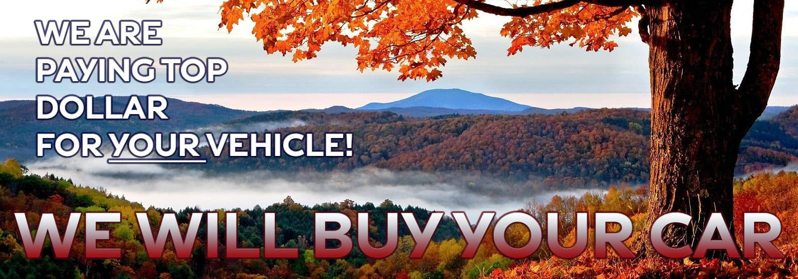 We Will Buy Your Vehicle!