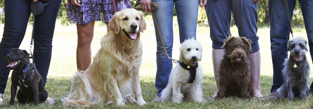 Trusted Dog Trainers around Jenkintown PA